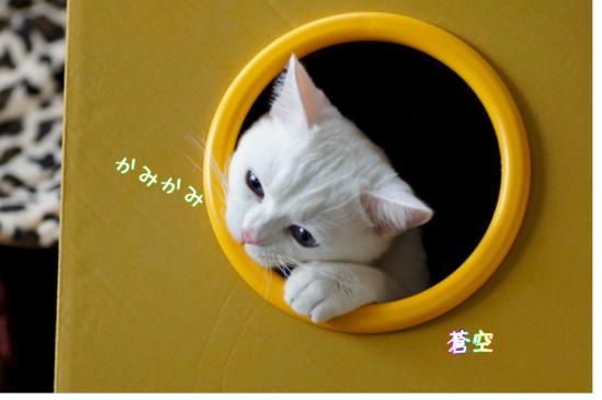 4_20120211191413.jpg