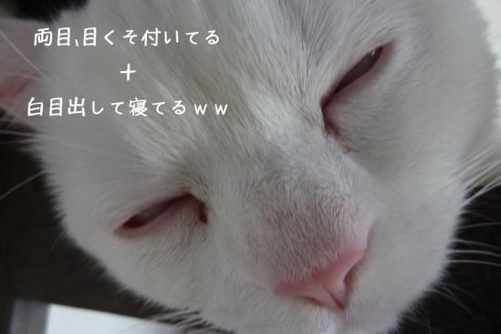 4_20120212143037.jpg