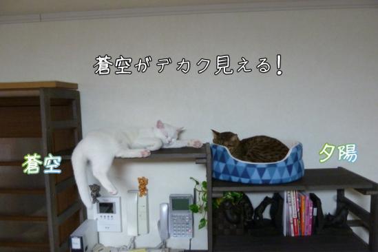 4_20120301080005.jpg