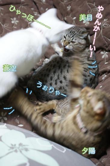 5_20111215084416.jpg