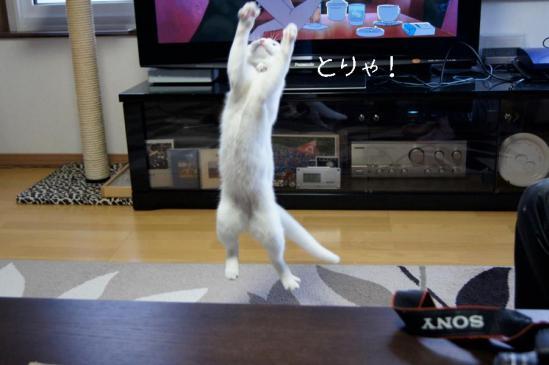 5_20111230085619.jpg