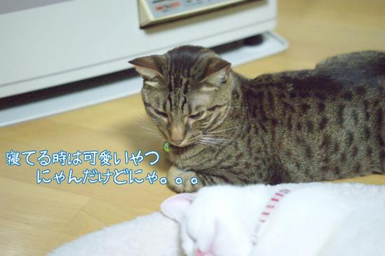 5_20120108071221.jpg