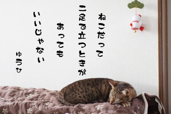 5_20120117233210.jpg