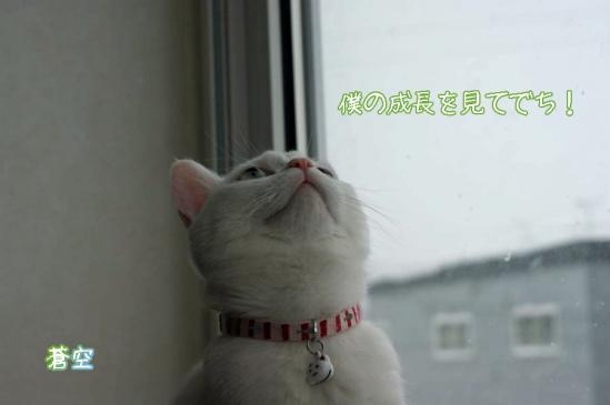 6_20111230225439.jpg