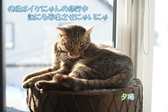 6_20120103130317.jpg