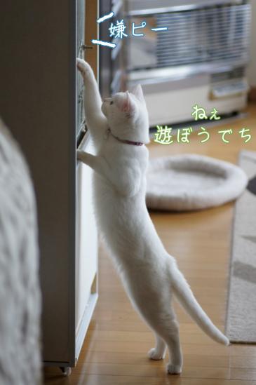 7_20120221011205.jpg