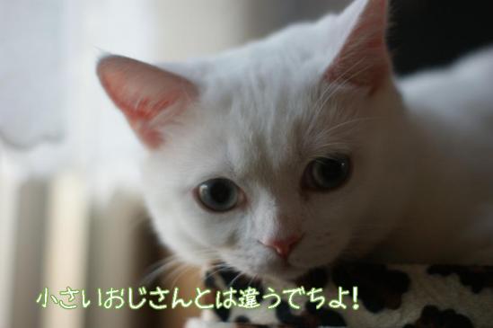 8_20111212085918.jpg
