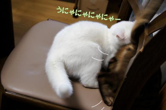 8_20111229093934.jpg
