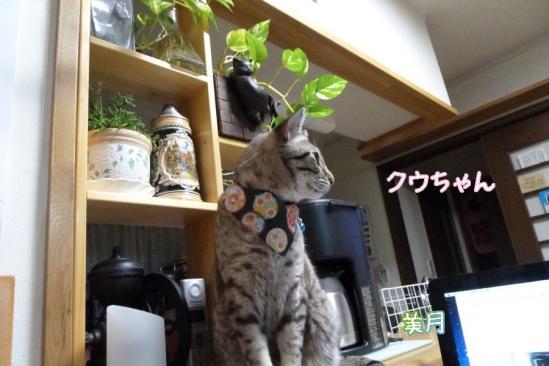 8_20120127074104.jpg