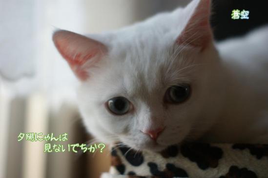 9_20111125095323.jpg