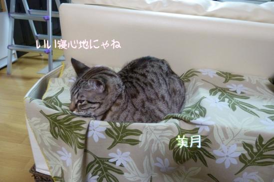 9_20120128234215.jpg