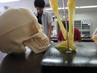 骨格の学習