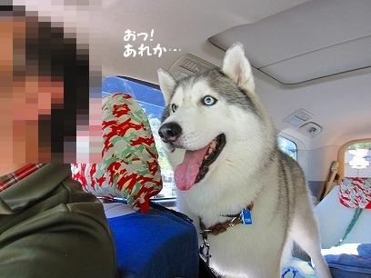 IMG_1689_20091020201146.jpg