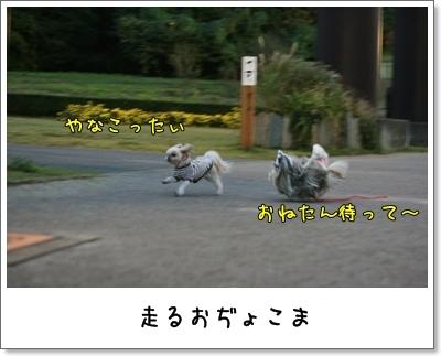 2009_1025_170019AA.jpg