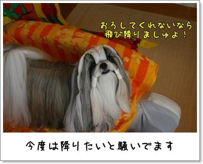 2009_1029_073445AA.jpg