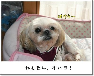 2009_1103_122641AA.jpg