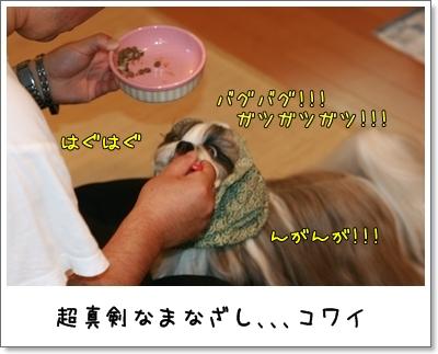 2009_1106_063246AA.jpg