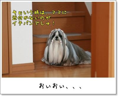 2009_1109_074416AA.jpg