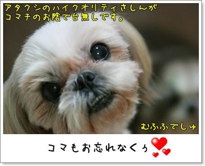 2009_1110_191813AA.jpg