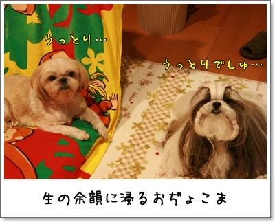 2009_1121_204512AA.jpg