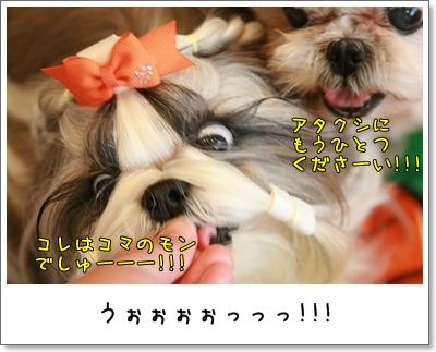 2009_1122_114338AA.jpg