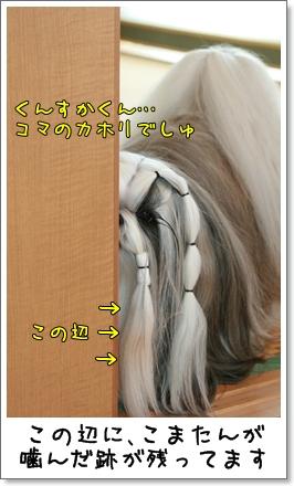 2009_1124_073621AA.jpg