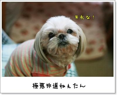 2009_1124_185820AA.jpg