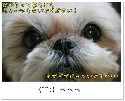 2009_1126_192603AA.jpg