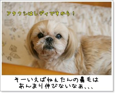 2009_1129_082557AA.jpg