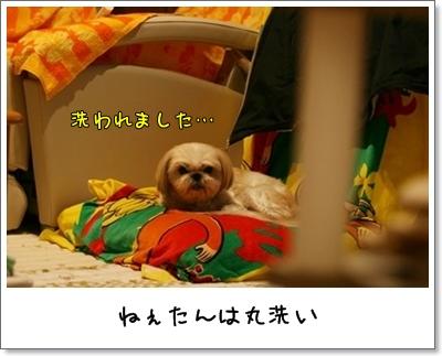 2009_1201_175209AA.jpg
