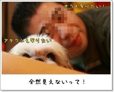 2009_1212_124313AA.jpg