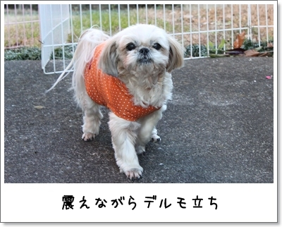 2010_0102_142237AA.jpg