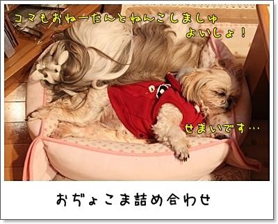 2010_0115_223601AA.jpg