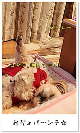 2010_0115_232141Ab.jpg