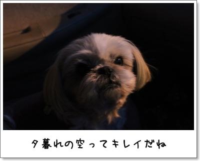 2010_0117_171744AA.jpg