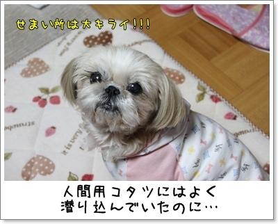 2010_0128_193820AA.jpg