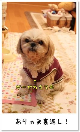 2010_0129_204818AA.jpg