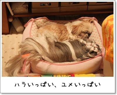 2010_0129_224024AA.jpg