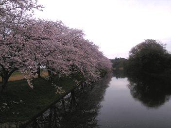 10桜福岡堰