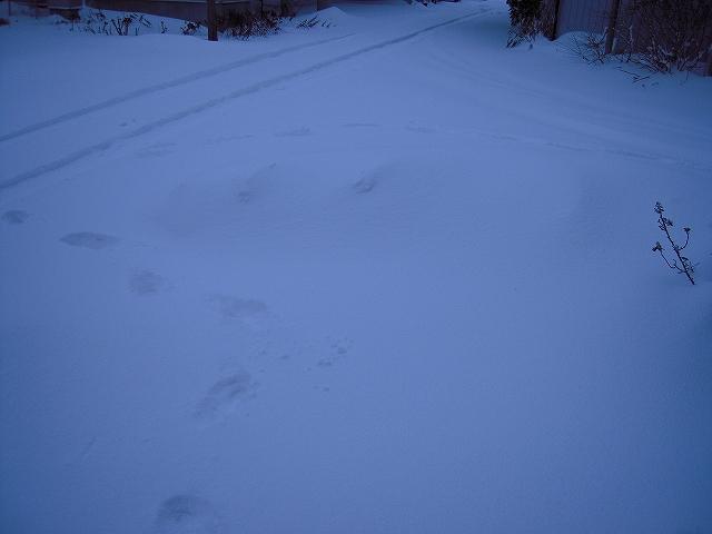 暴風雪002