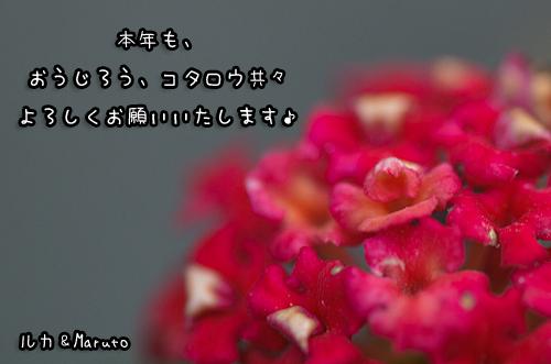 *7-DSC_2841