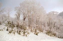 オロフレ峠霧氷 縮小