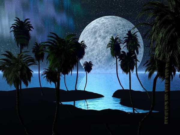full-moon-and-palms_max600.jpg
