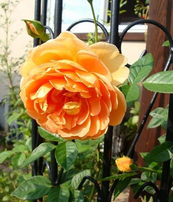 きれいなオレンジ