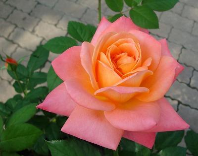 オレンジとピンク