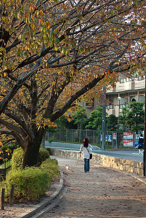 杁ヶ池公園-11
