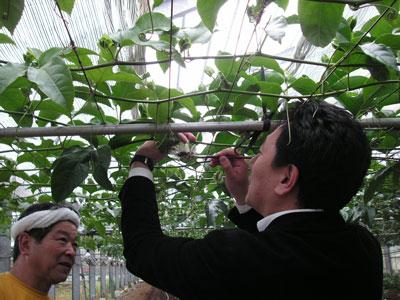 花の露さん交配