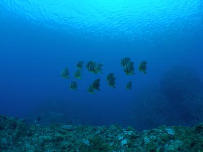 沖縄本島南部ファンダイビング