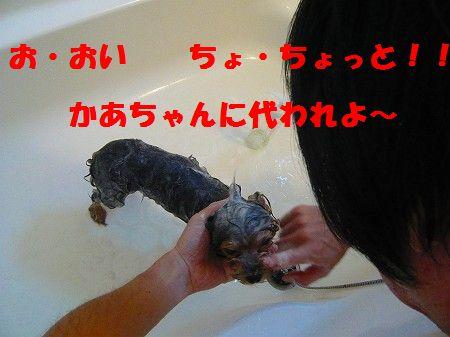 s-2009_0917_144858-P1020030.jpg