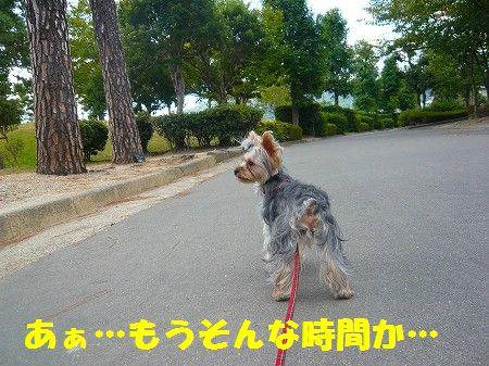 s-2009_0920_092153-P1020060.jpg